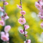 写真さんぽのワークショップ、春の花撮影とピザランチ(写真散歩・春2)