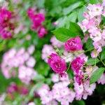 秘密の花園(春・17)