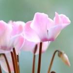 おうちのふんわりお花たち(冬・7)