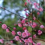 新宿御苑散歩(春2)
