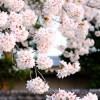 ふじみ野お花見さんぽ(写真散歩・春3)