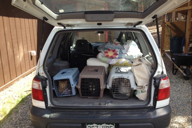 With the car mostly loaded up, I tried one more time to get my missing cat into the house ... to no avail. Driving away with only three cats was one of the toughest things to do.