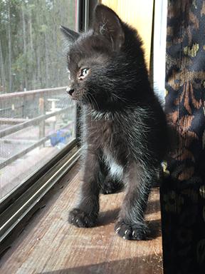 Frank - foster kitten