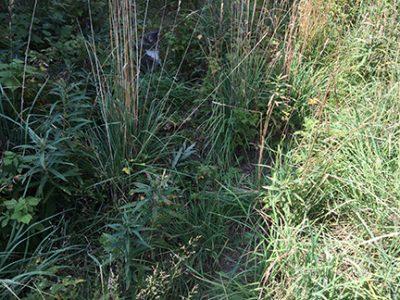 Skeeter in the weeds