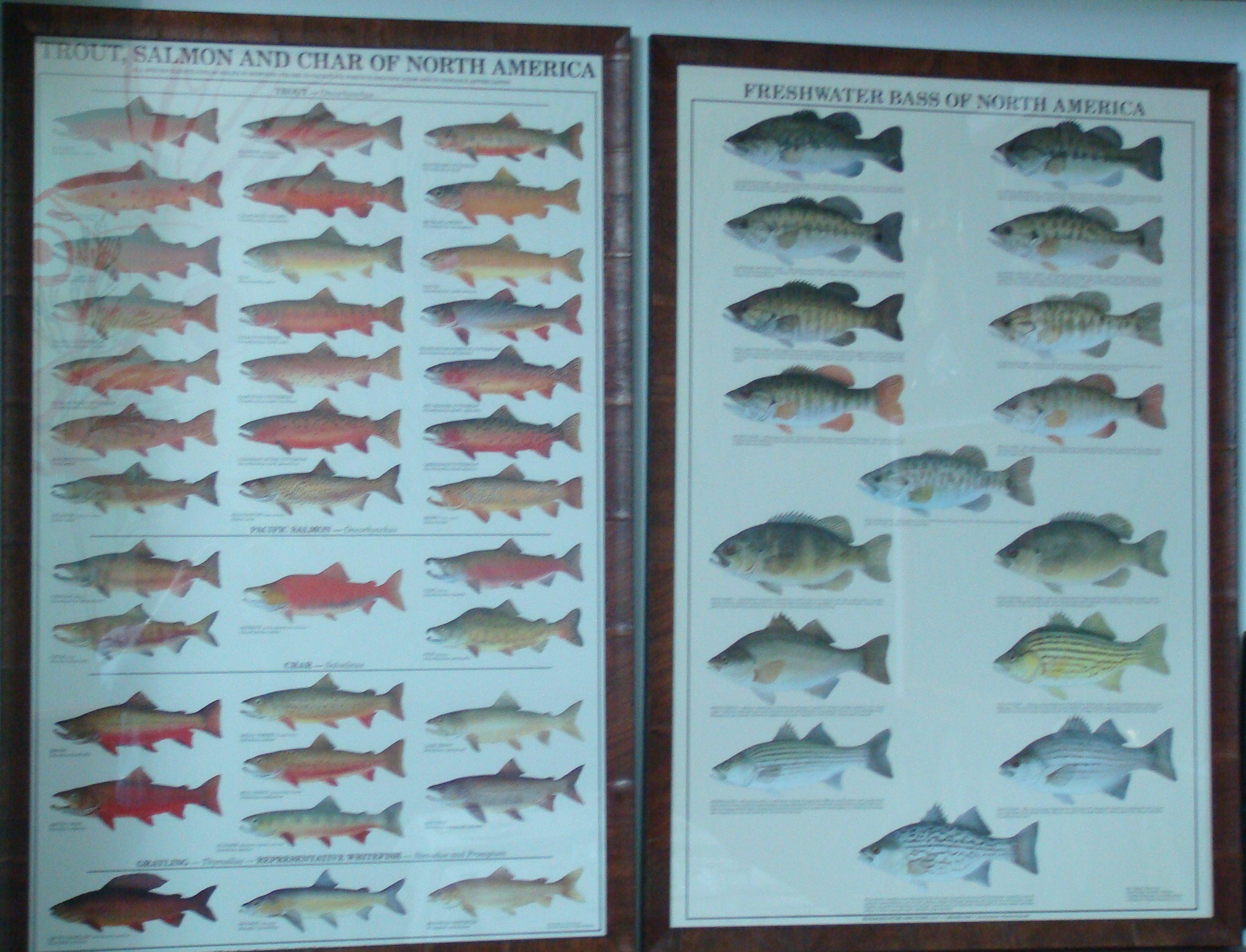 List of fish.