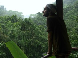 Staring out into Rainforests, Western Ghats, India
