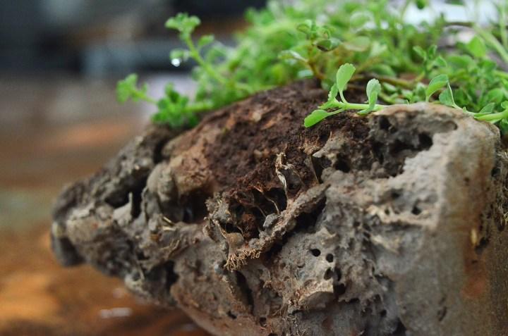 green-charcoal-bio-brick-04