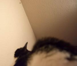 A moth hunting cat 3