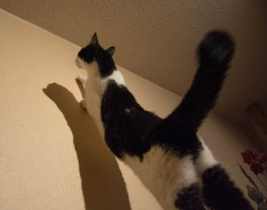 A moth hunting cat 4