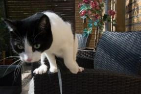 cat-ouside-terrace-quest-snapshot-3