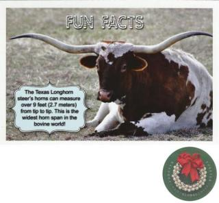 postcard, usa, postcrossing, texas, bull, stamp