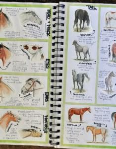also best equine behavior images horses horse anatomy camp rh pinterest
