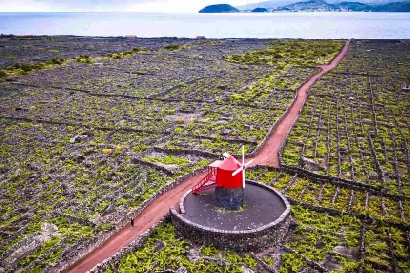 Açores Ilha do Pico Património Mundial