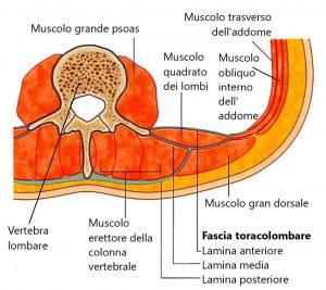 mal di schiena, REPA, Cuccomarino