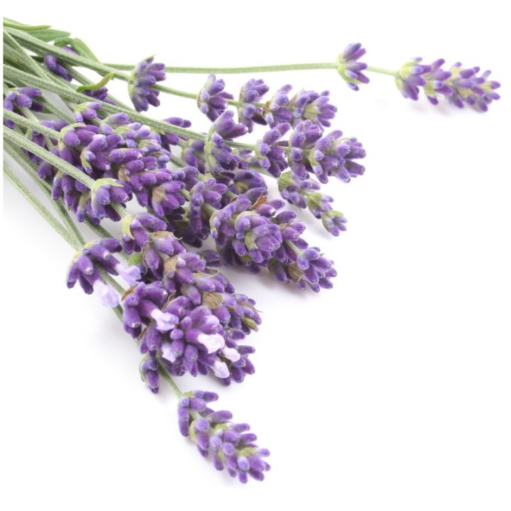 ΛΕΒΑΝΤΑ – LAVANDULA OFFICINALIS