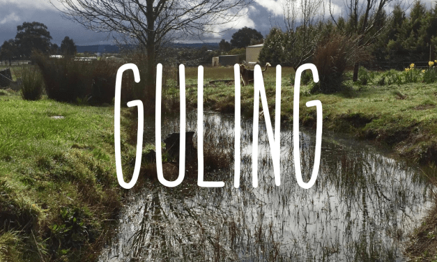 Welcome to Guling season.