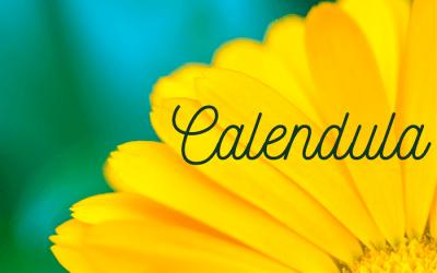 Calendula in Winter for Pollinators