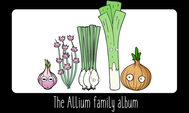 THE ALLIUMS