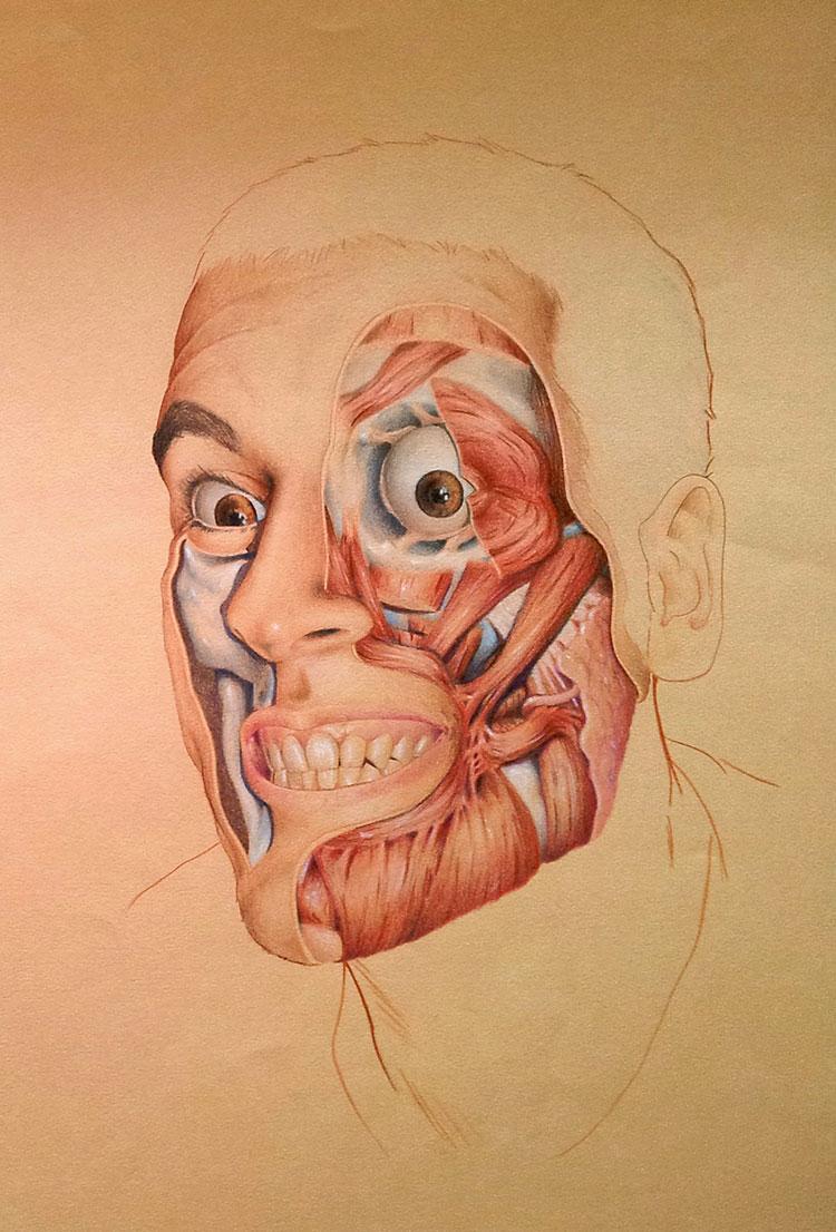 preguntas y respuestas sobre el dibujo