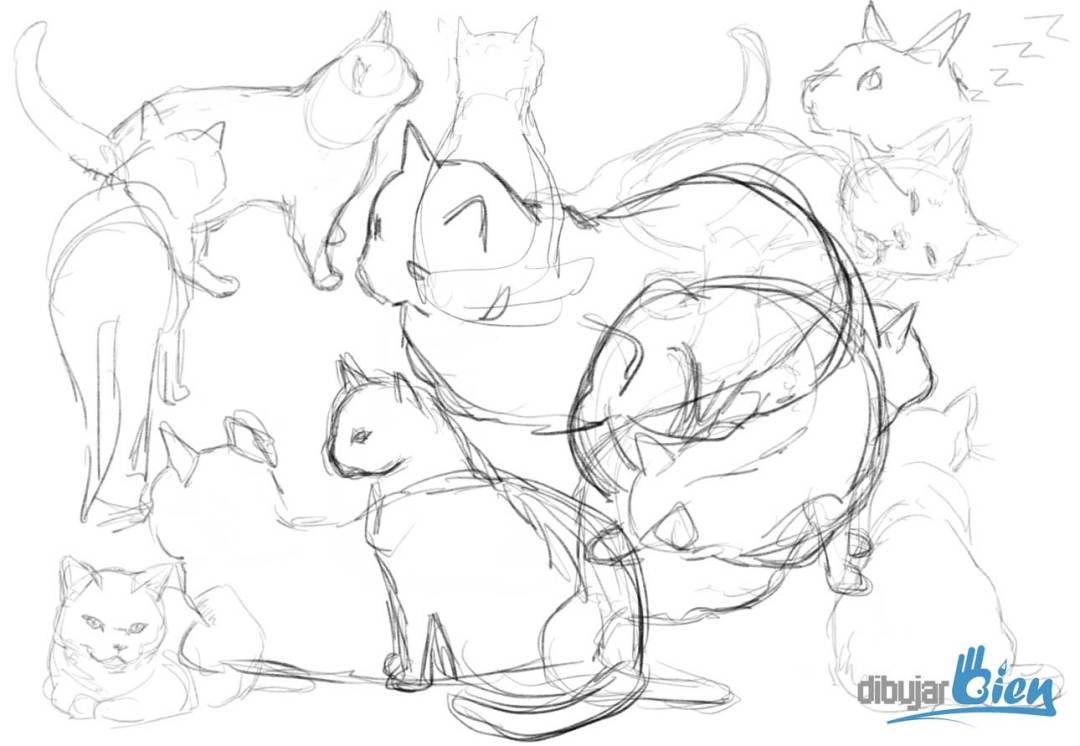 Hacer estudios de gatos