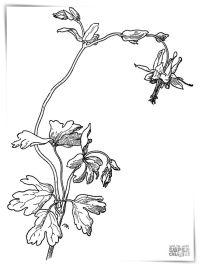 Dibujos de flores de nochebuena para imprimir a4 ...