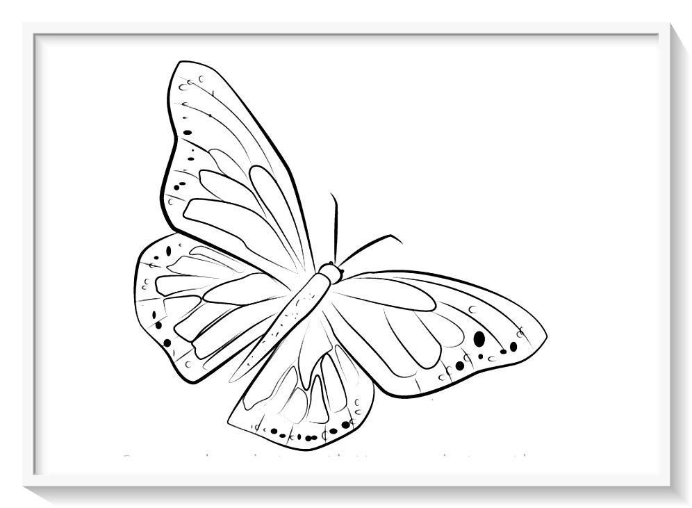la mariposa monarca para colorear 🥇 Biblioteca de imágenes