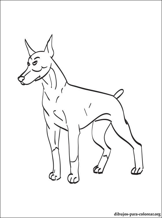 Doberman Pinscher Coloring Page