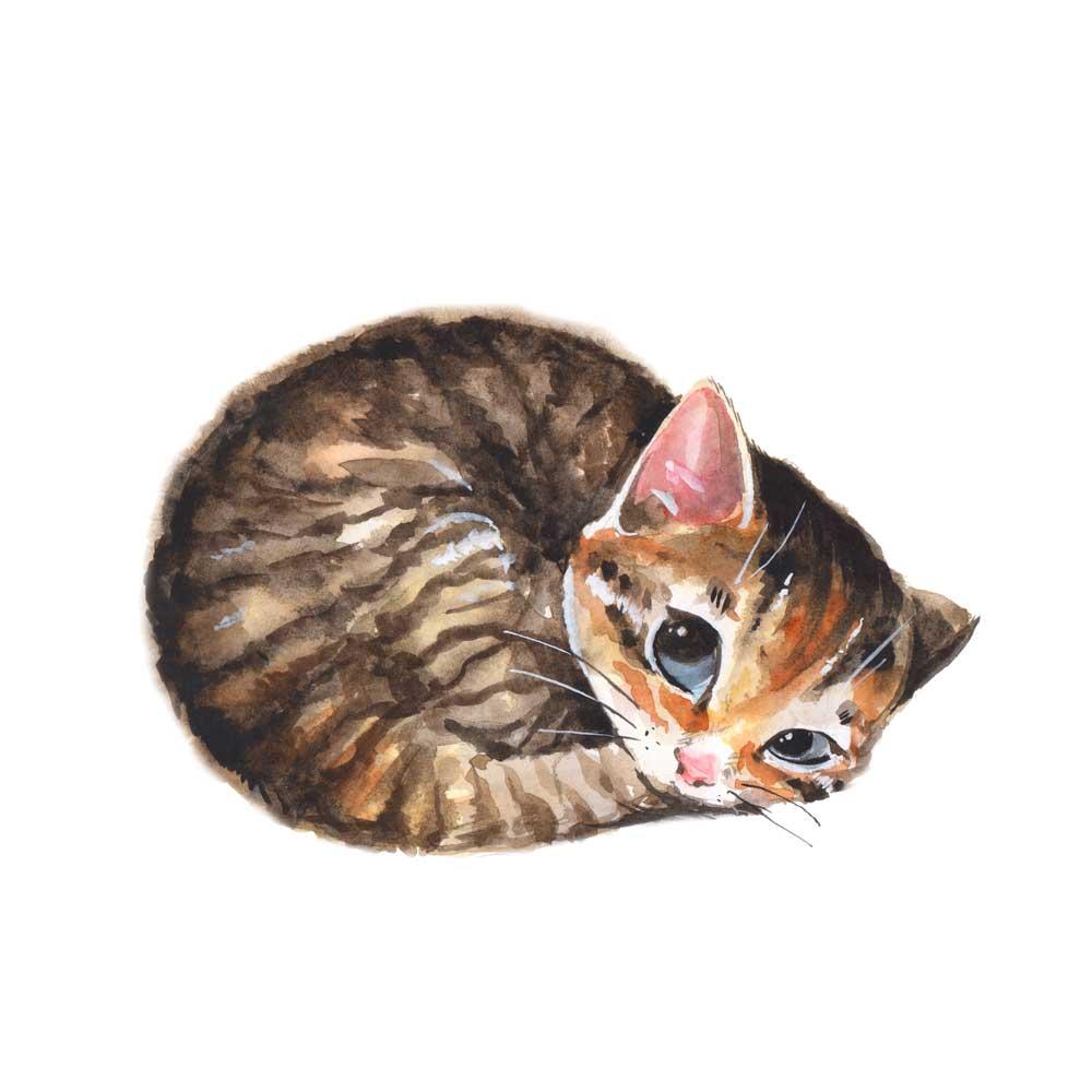 Gatos Kawaii Imgenes De Gatitos Dibujos Para Colorear Y
