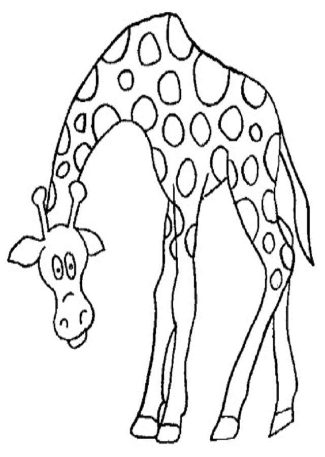Animales Para Colorear Imprimir Jirafa