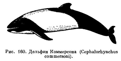Balenele ucigătoare captive - Captive killer whales - wigo.ro