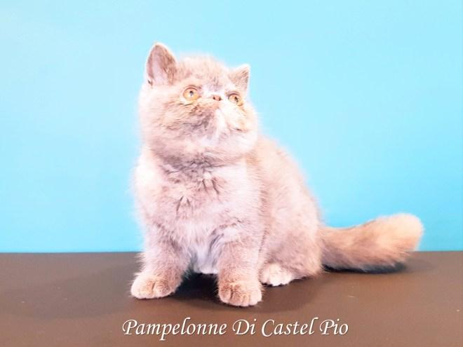 Pampelonne Di Castel Pio 2019 (1002 sur 6)