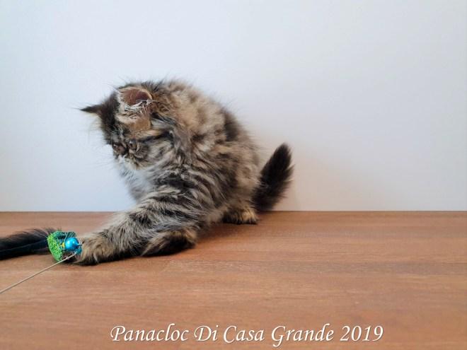 PANACLOC Di Casa Grande (56 sur 12)