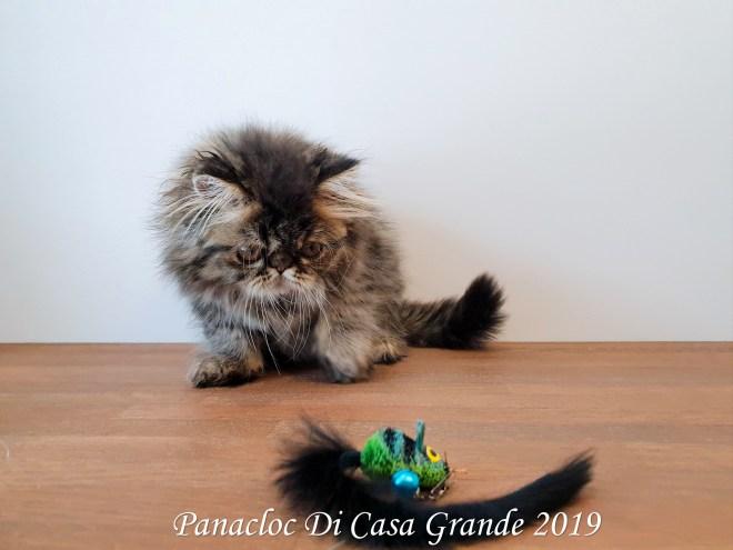 PANACLOC Di Casa Grande (57 sur 12)