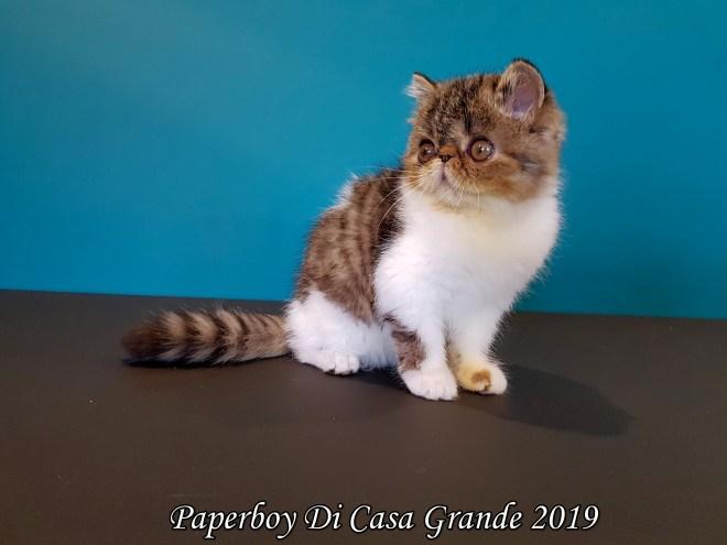 PAPERBOY Di Casa Grande 2019 (24 sur 32)