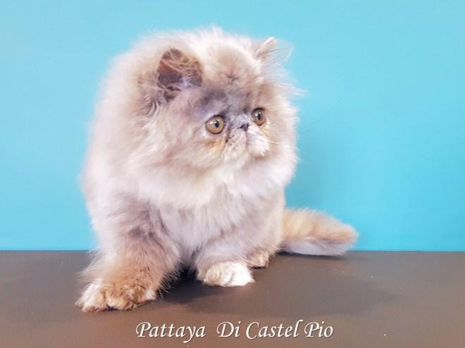 Pattaya Di Castel Pio 2019 (1001 sur 6)