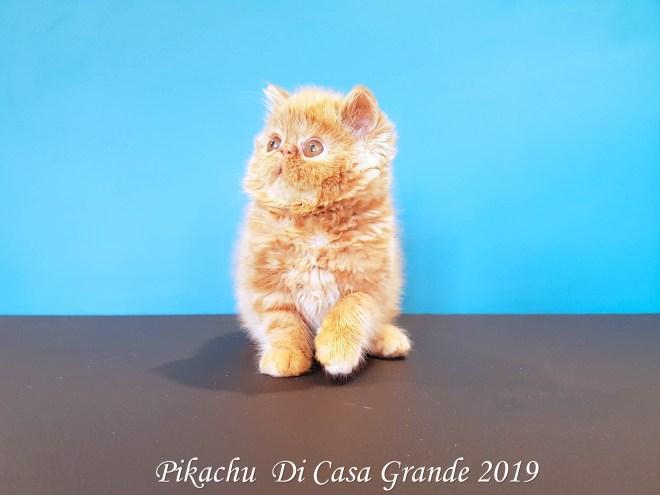 PIKACHU Di Casa Grande 2019 (10 sur 20)