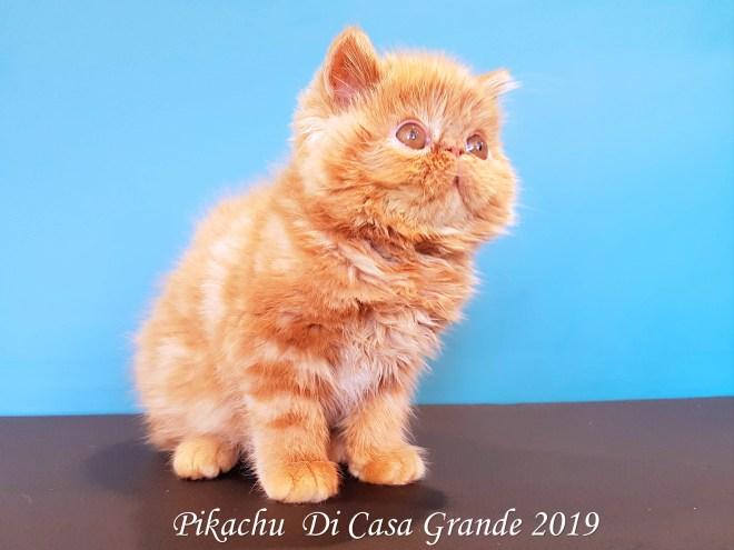 PIKACHU Di Casa Grande 2019 (15 sur 20)