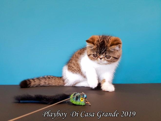 PLAYBOY DCG Di Casa Grande 2019 (8 sur 11)