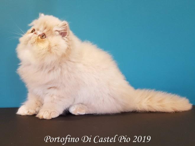 Portofino Di Castel Pio 2019 (113 sur 25)