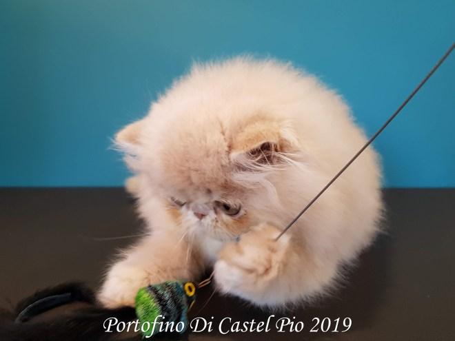 Portofino Di Castel Pio 2019 (114 sur 25)