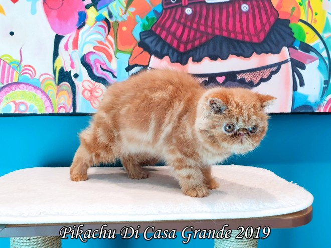 Pikachu Di Casa Grande (1006 sur 26)