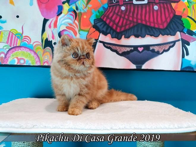 Pikachu Di Casa Grande (1019 sur 26)