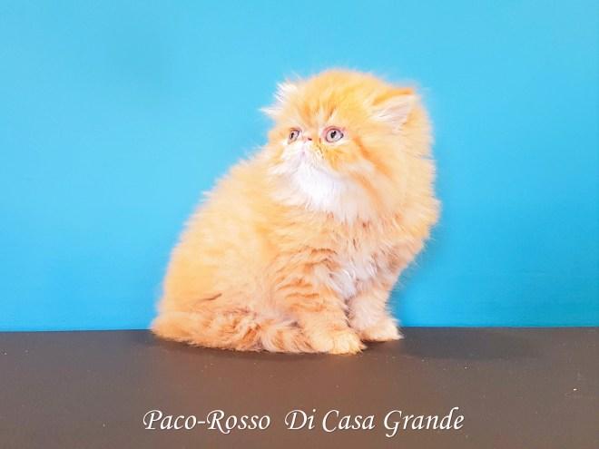PACOROSSO Di Casa Grande (101 sur 24)