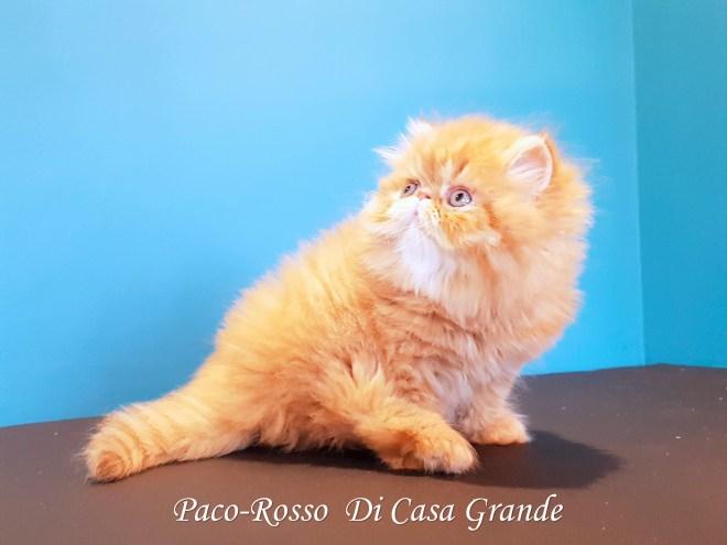 PACOROSSO Di Casa Grande (103 sur 24)