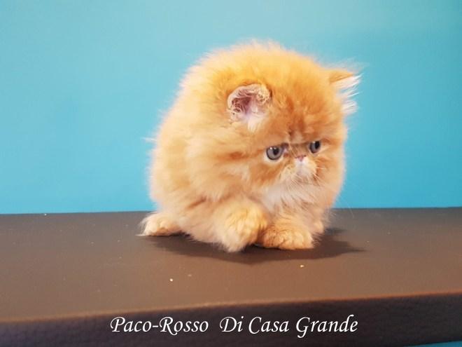 PACOROSSO Di Casa Grande (110 sur 24)