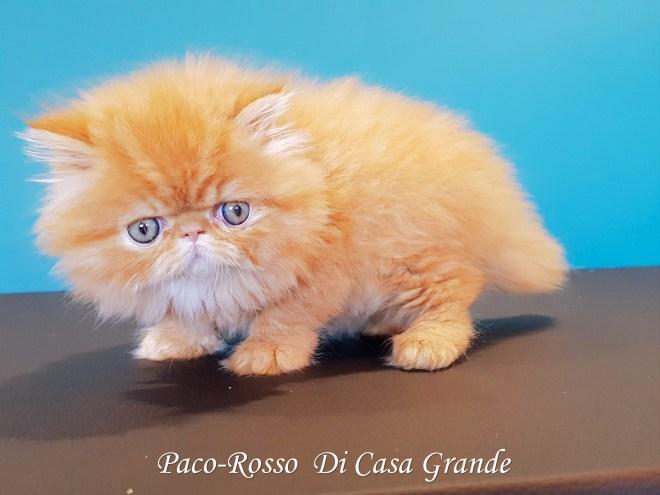 PACOROSSO Di Casa Grande (112 sur 24)