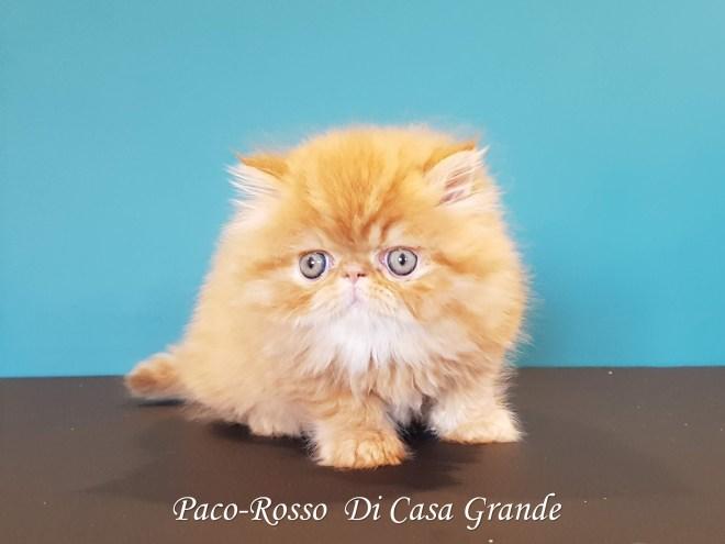 PACOROSSO Di Casa Grande (114 sur 24)