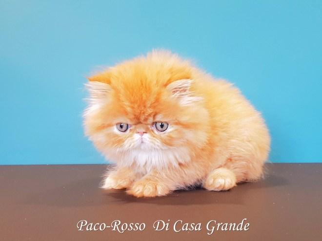 PACOROSSO Di Casa Grande (116 sur 24)