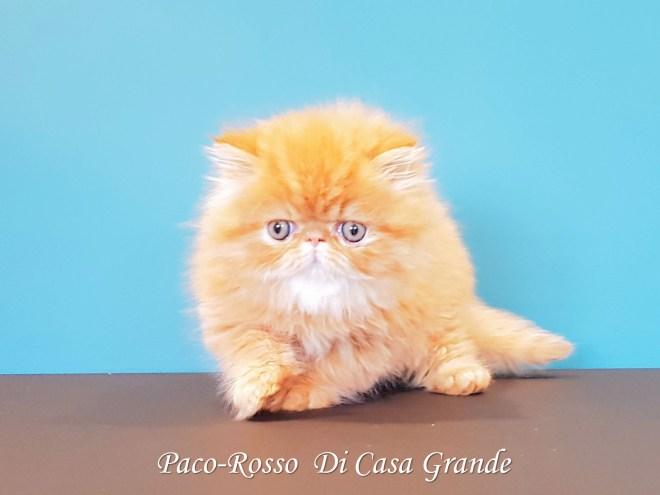 PACOROSSO Di Casa Grande (117 sur 24)