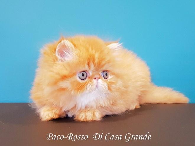 PACOROSSO Di Casa Grande (119 sur 24)